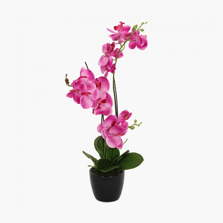 Sachi Potted Orchid in Ceramic Pot